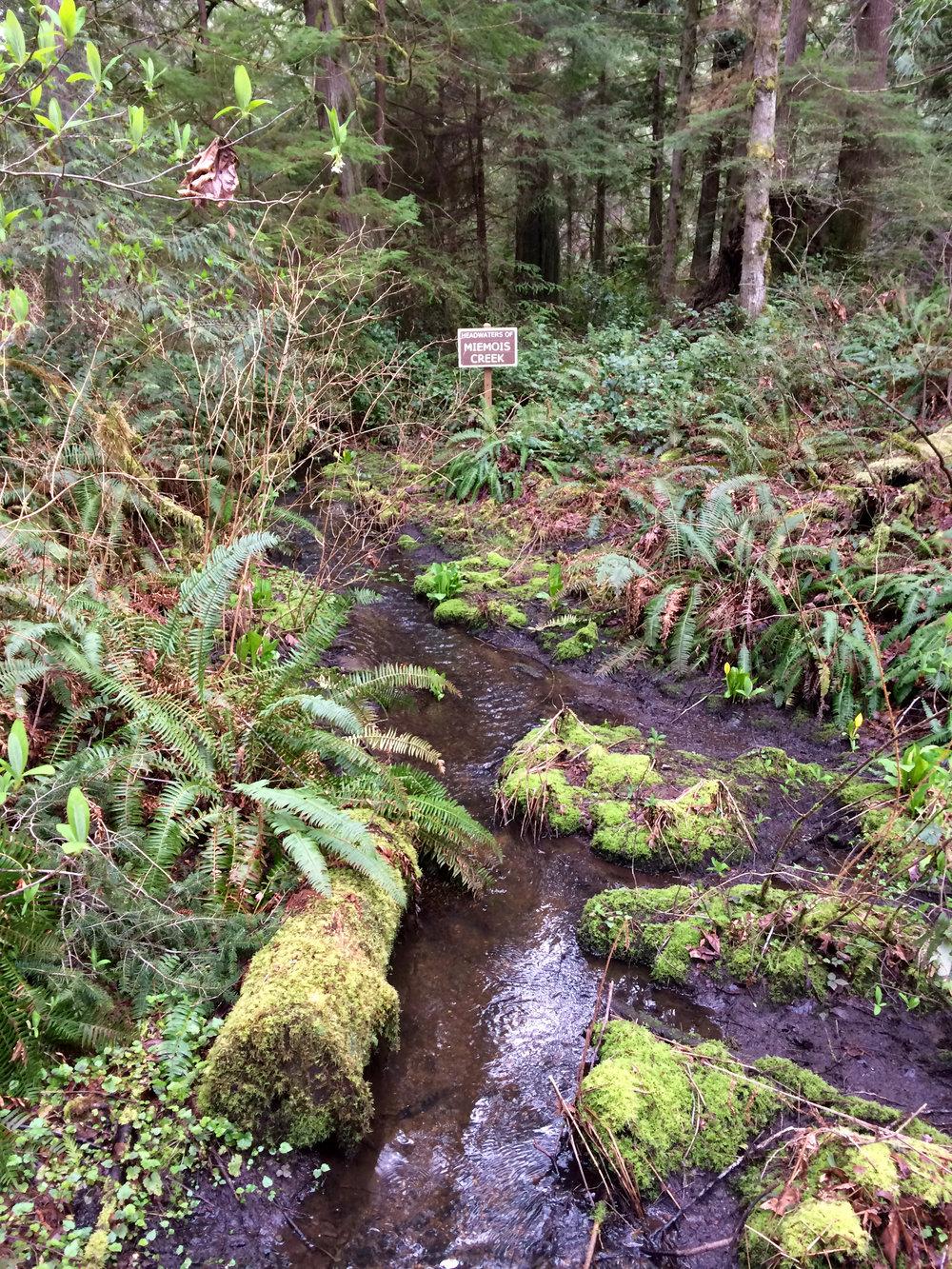 Miemois Creek, Grand Forest, Bainbridge Island