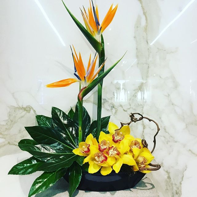 •Tropical Getaway Workshop• Even though it's -20 outside we can pretend to be on an island Paradise. 😊  Create your own Exotic Floral  Arrangement while you sip on a Tropical Cocktail. 🍹  Our Florists will guide you through the whole process!  All Materials, Drinks and Snacks included.