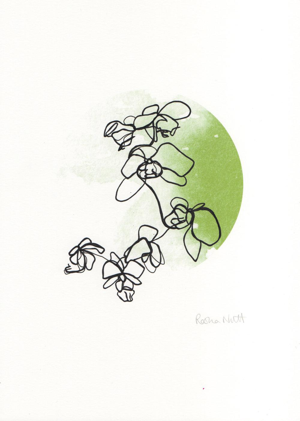 GreenOrchids.jpg