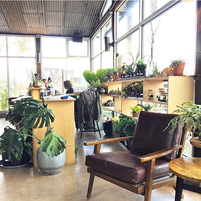 So much #greenspo at @opuntiacafe in #santafe! Perfect place to be with my beautiful friend @randypickles who loves #plants more than anyone I know. 😍🌱🌵🍃🌿 . . . #seattleorthodontist #southlakeunionorthodontist #belltownorthodontist #🆑orthodontics #orthodontics #orthodontist #braces #invisalign #dentalofficedesign #thesmilespaceinspo #thesmilespace @the.smile.space #plant #plantlife #plantlovers #plantsofinstagram #greenery #greenhouse #greenlife