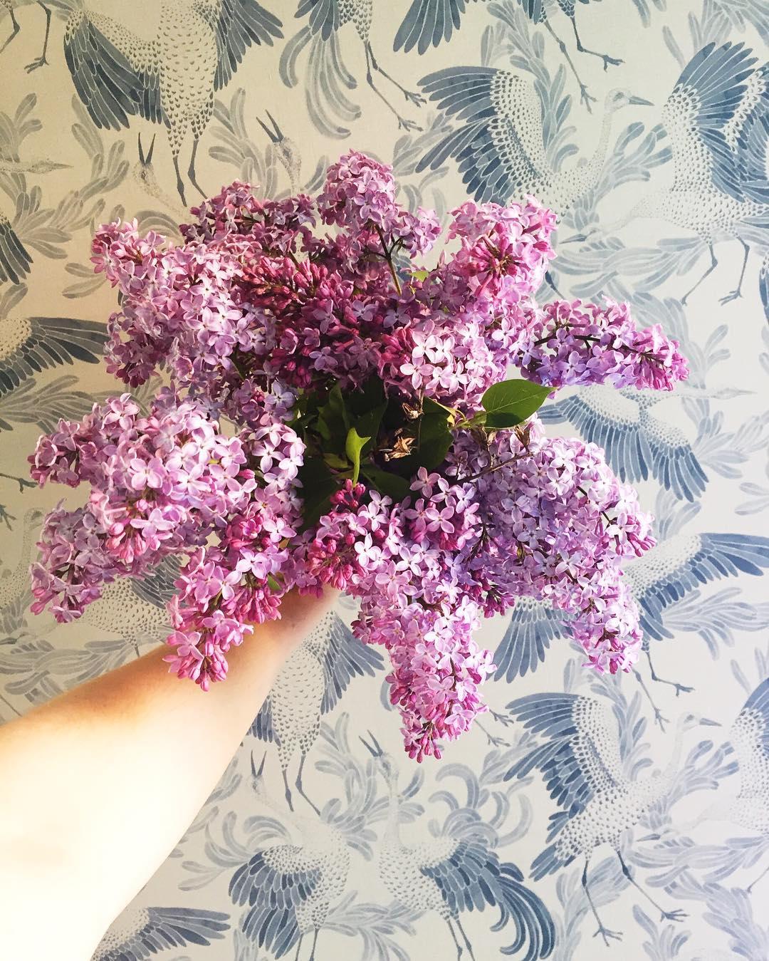 Perfect bouquet for the last day of may #lilacs #tusenogenhatt #tusenogenhattcom #rom123 #boligliv #boligdrøm #boligpluss #interior4all #boligliv_dk #vakrehjemoginteriør #heminredning #kkliving #elledecoration #apartmenttherapy #boliginretning #boligliv #rumrum