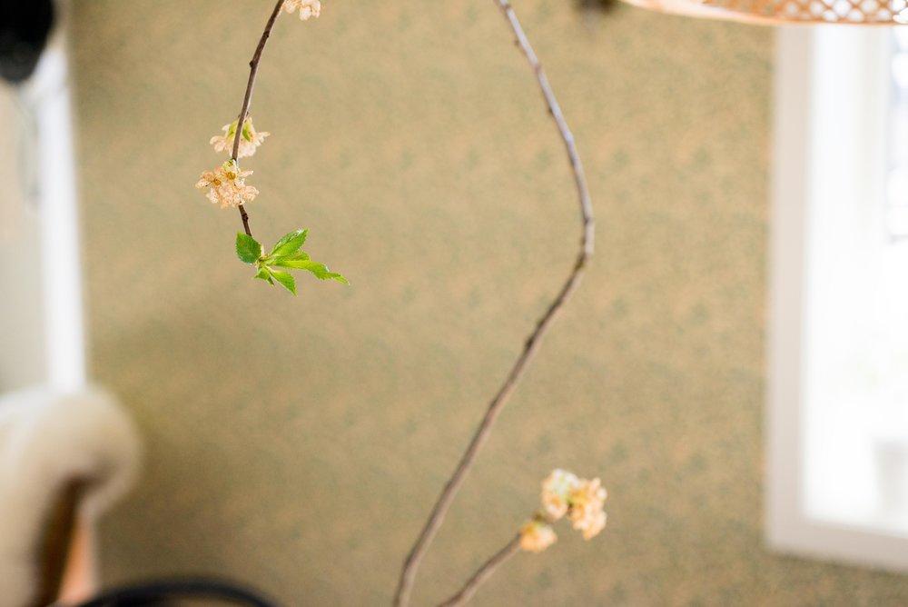 Kirsebærblomsten blomstret så kort. Nesten metaforisk kort..