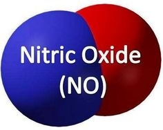 Nitric Oxide Society