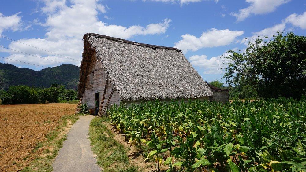 cigar-plantation.jpg