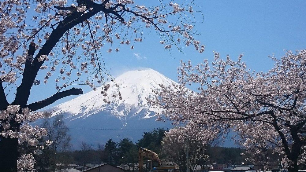 fuji-blossom.jpg