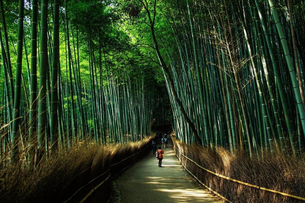 kyoto-bamboo.jpg