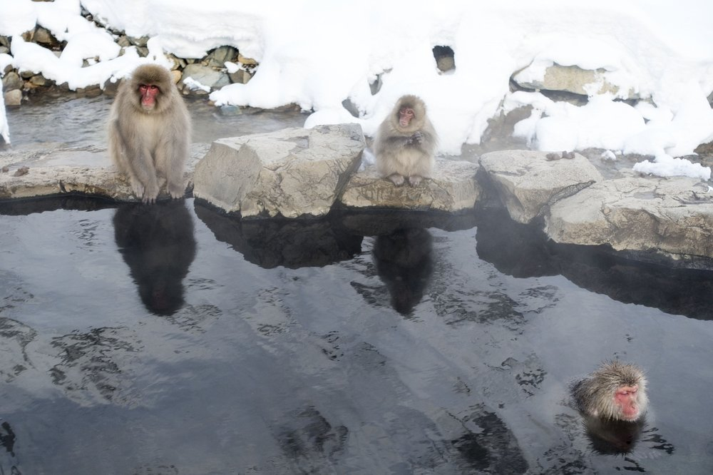 snow-monkeys-onsen.jpg