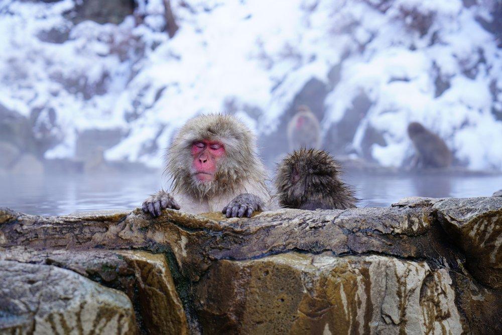 nagano-monkey.jpg