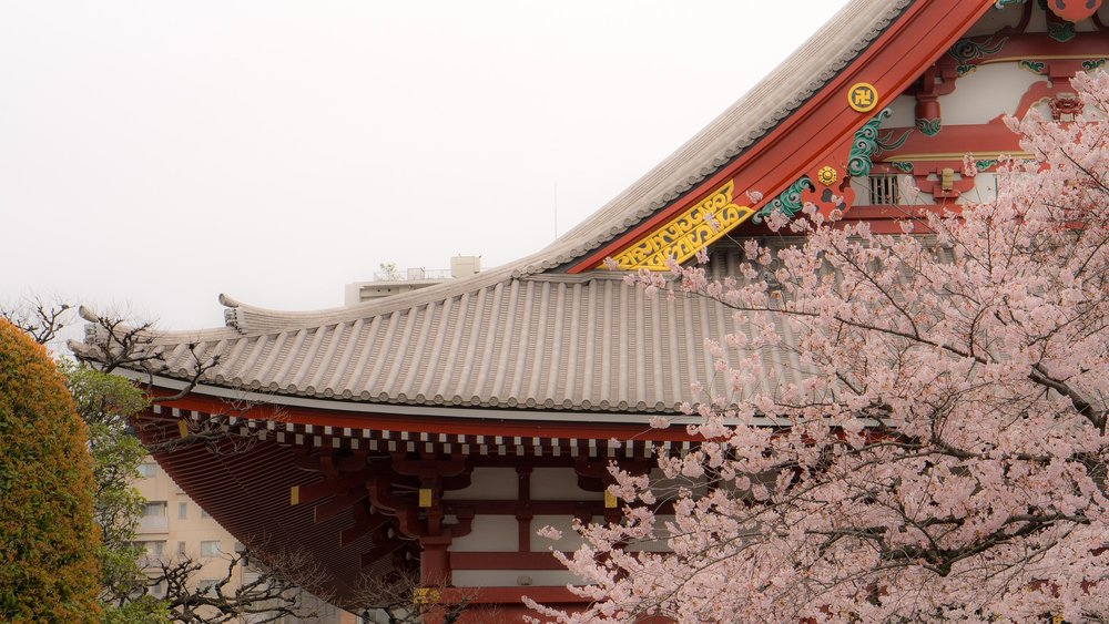 asakusa-blossoms.jpg