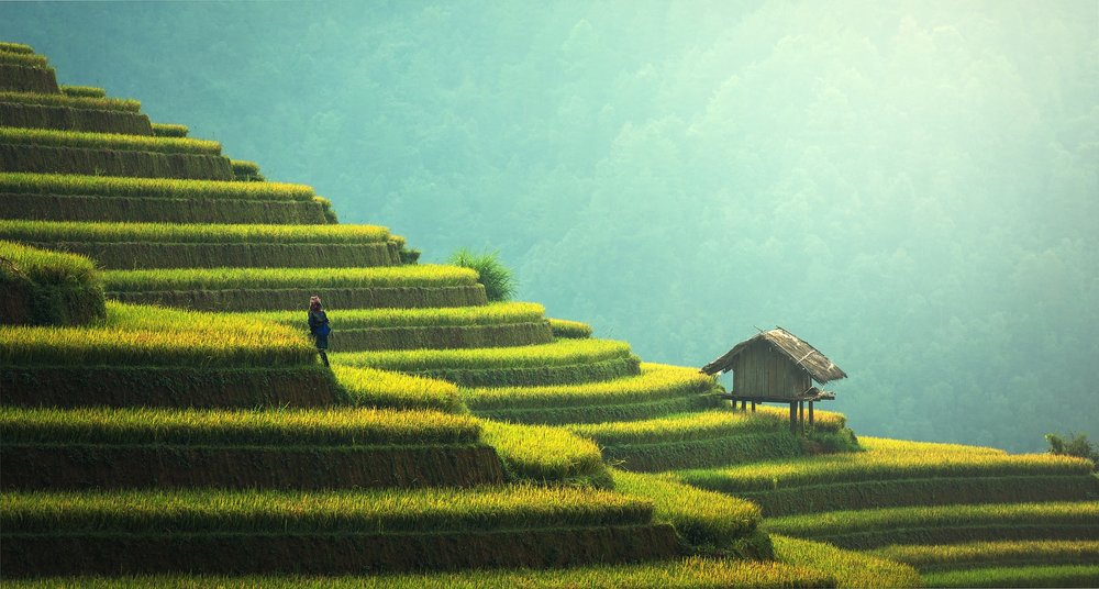 agriculture-guangxi.jpg