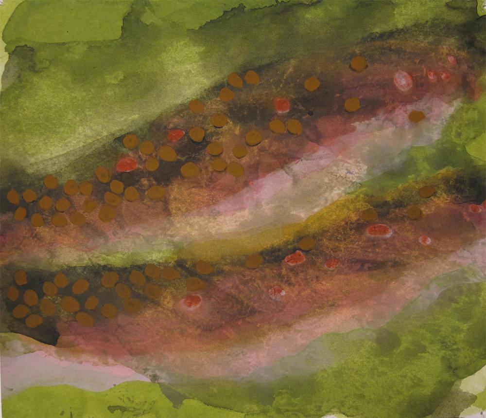 Salvelinus fontinalis-ochre (2016)