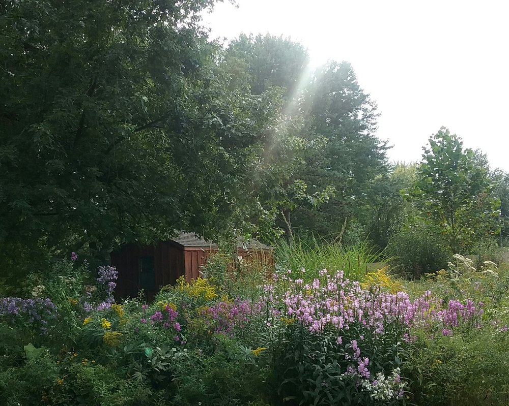A view of Hope's Garden, a naturalized garden filled with wildflowers that was once mowed lawn and former wetland where many trees were dying. In the distance, the former location of my hives behind my beekeeping gardening studio.