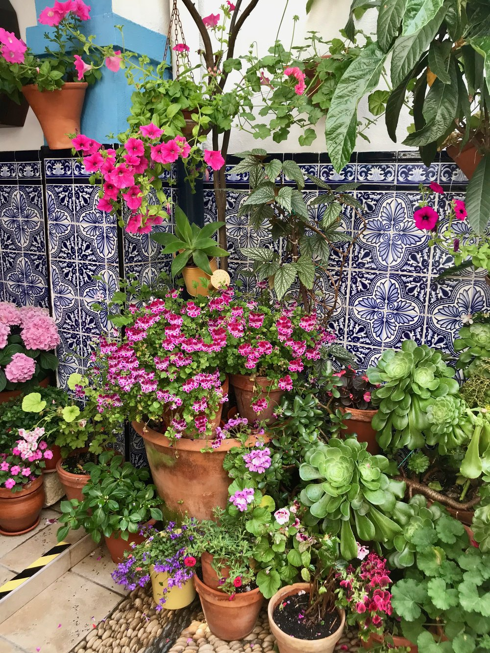 Tiles + flowers = the two ingredients for a classic patio.
