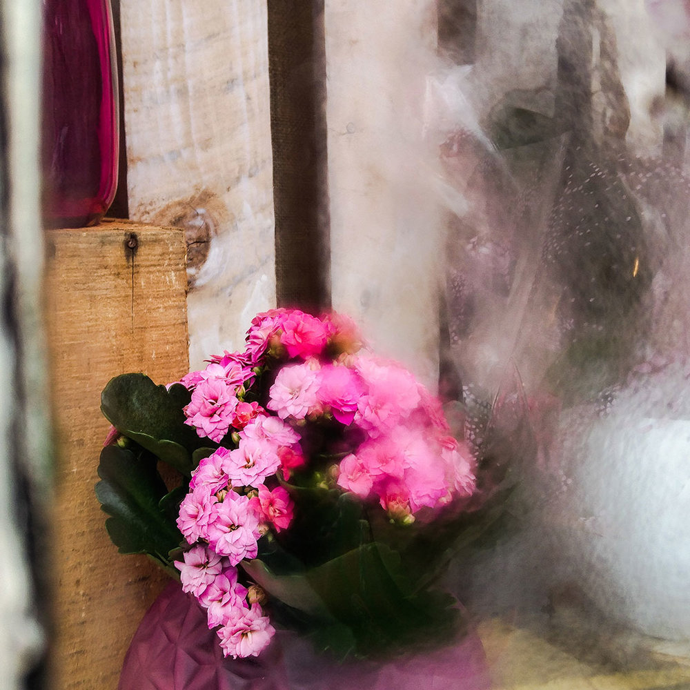 This florist window was covered in condensation and I think it makes an interesting shot