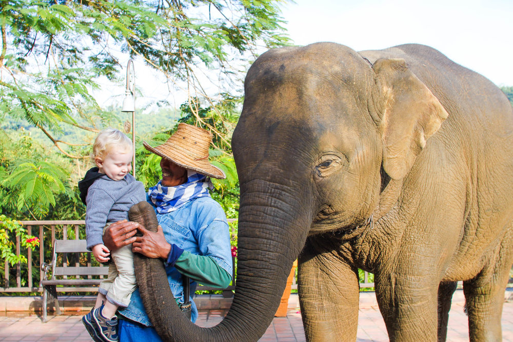 Greeting elephants during breakfast at the Anantara Golden Triangle