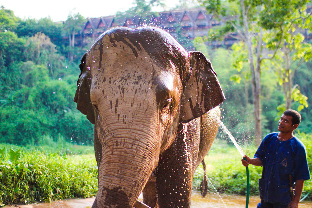 A mahout cooling down his elephant, seen on our private jeep tour of the resort (pictured in the background)
