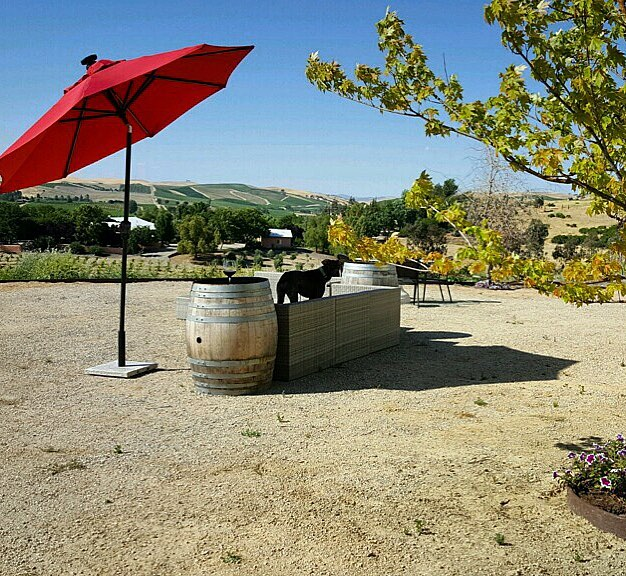 Suns out and we got shade for you! Your Dog will love it! ☀️🐶🍷😊 #dogfriendly