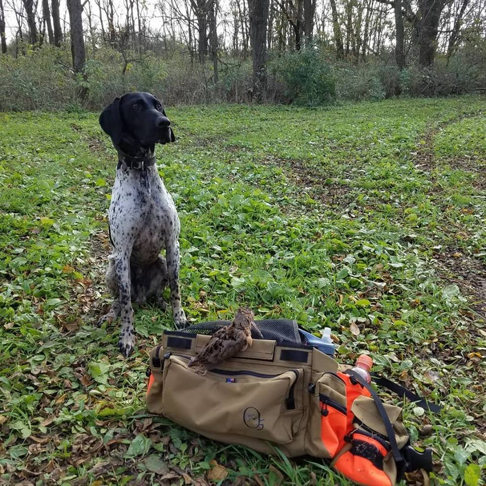 Buster on WI woodcock (Oct-2018)