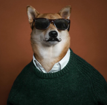 With a dog this stylish, he'll need an Instagram. @mensweardog