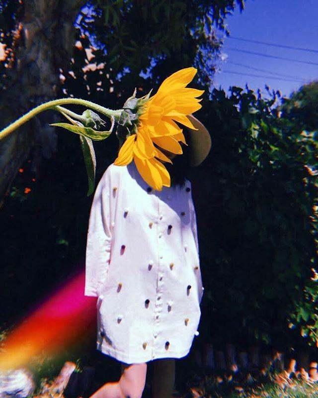 Linen, blue skies & sunflowers 🌻