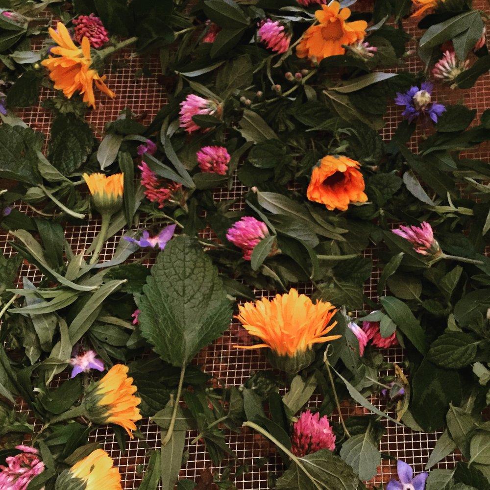 herbal-home-spa-256px-256px.jpg
