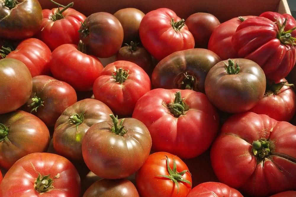 TomatoAtMarket.jpg