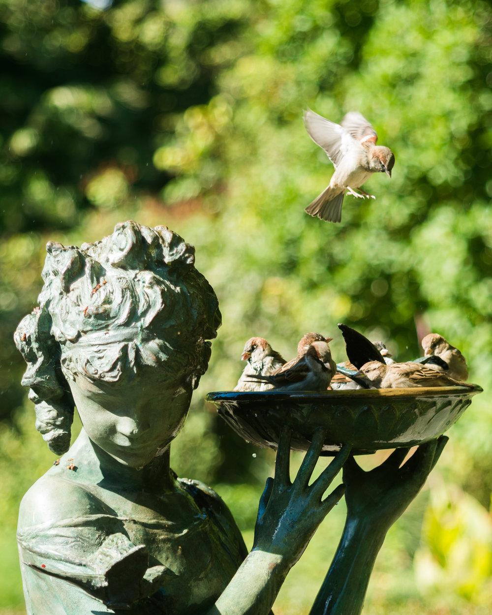 GARDEN BIRDS 2.jpg