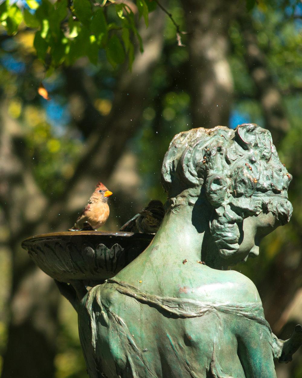 GARDEN BIRDS 3.jpg