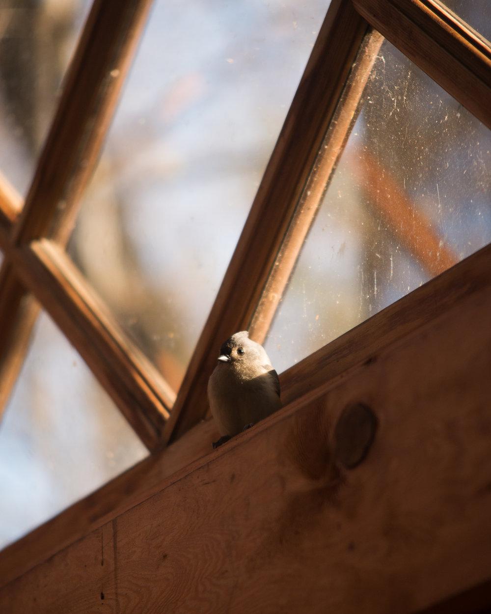 LONGWOOD BIRD 2.jpg