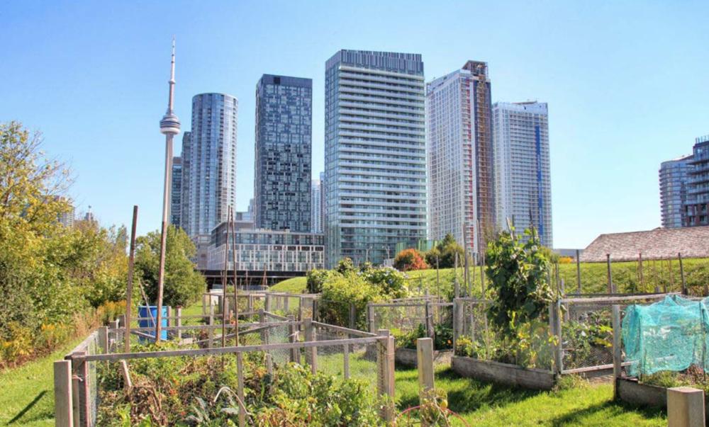 Fort York Community Garden (Toronto Community Garden Network [TCGN]).