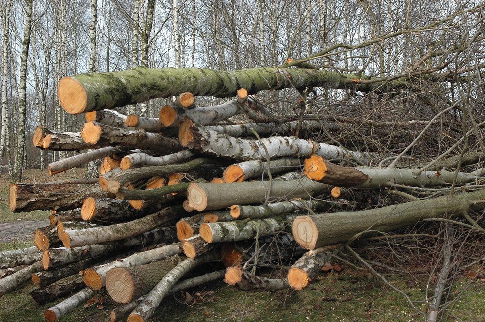 trees-cut-down.jpg