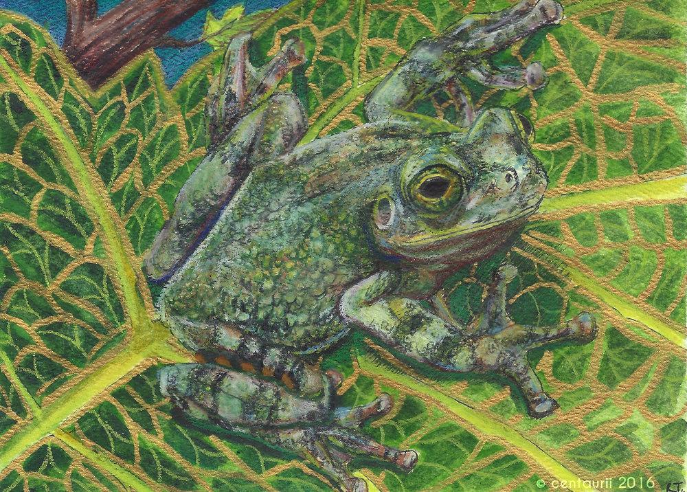 Gray Tree Frog (2016)