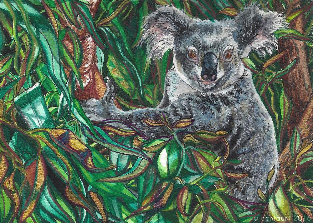 Koala Pause (2016)