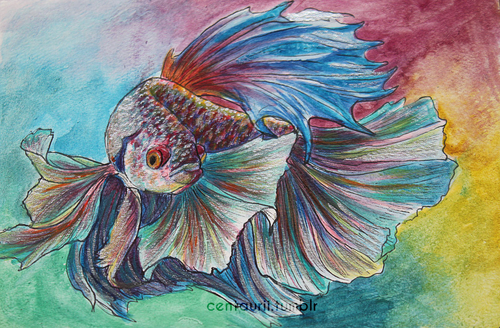 rainbow betta watercolor tumblr watermark smaller.jpg