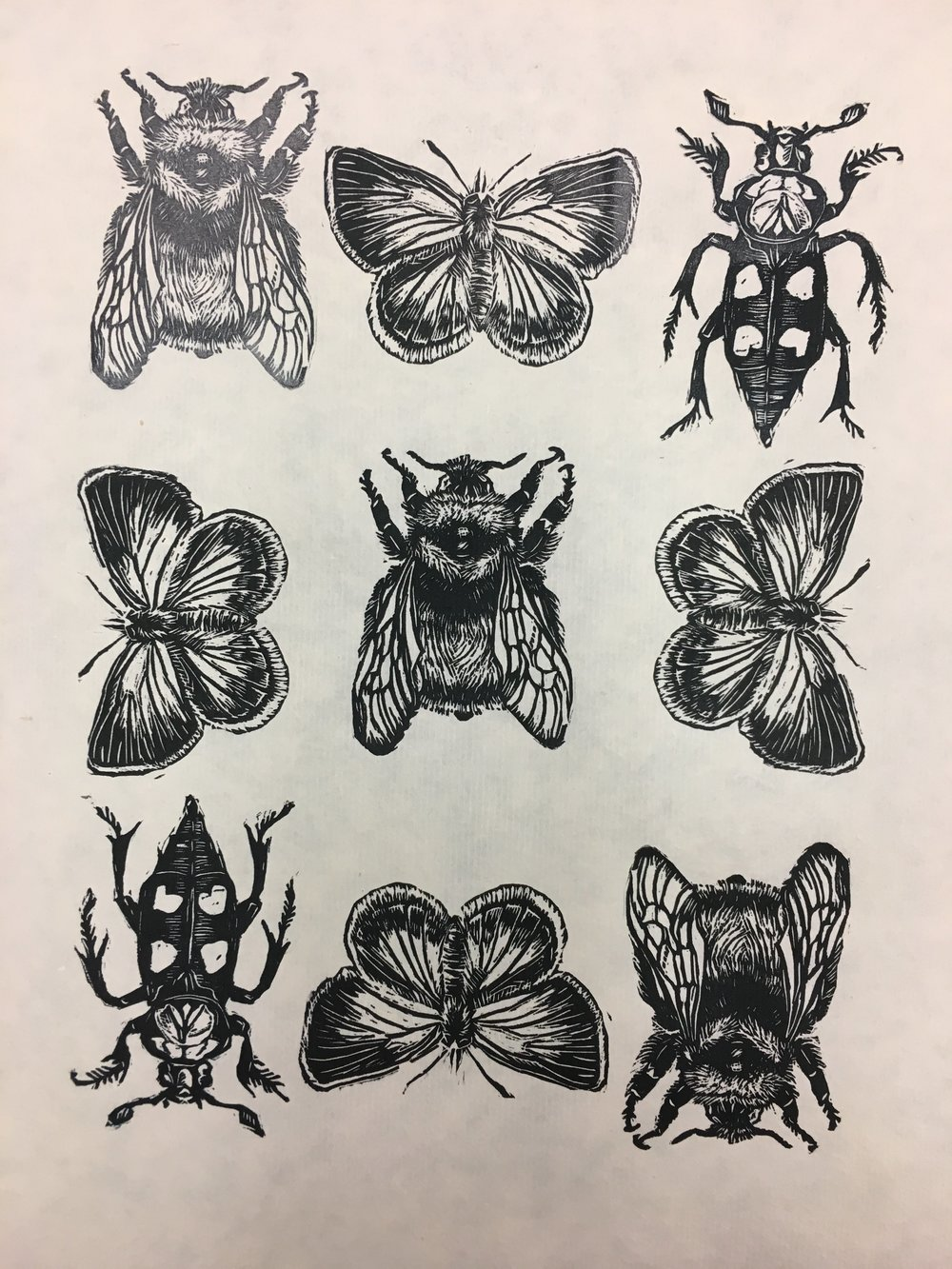 Endangered Insects of Ohio (2018)