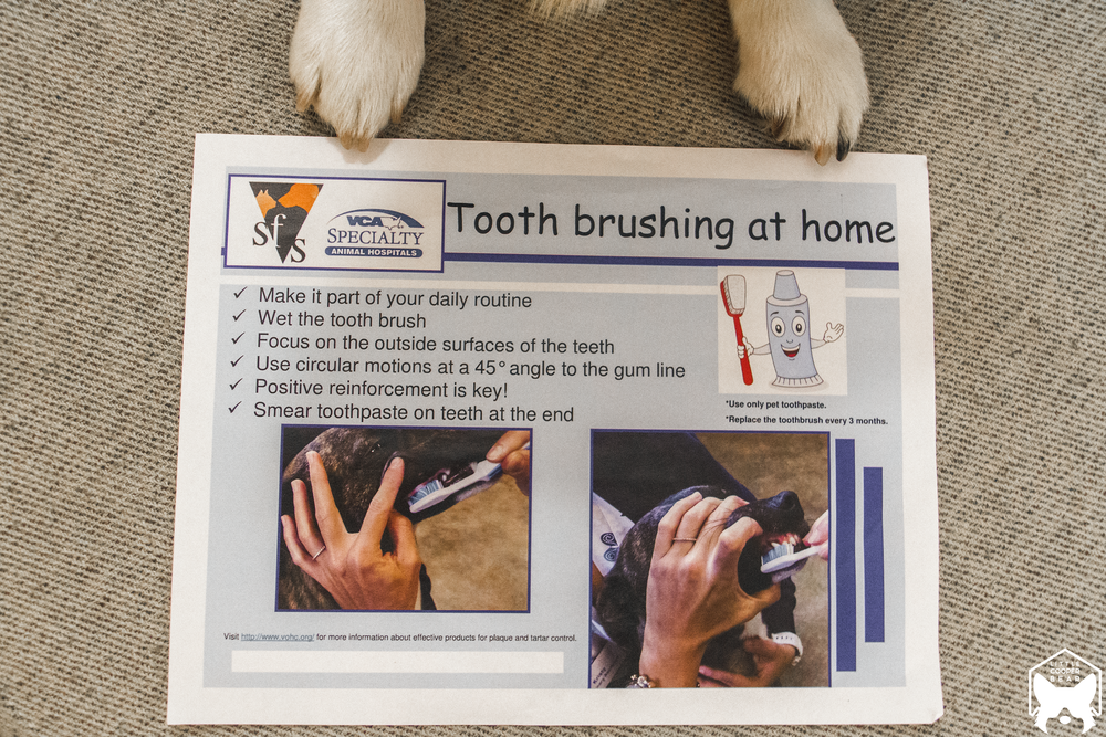 A how-to guide in brushing teeth at home.