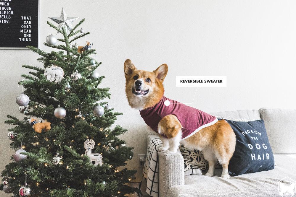 DogOutfit.jpg