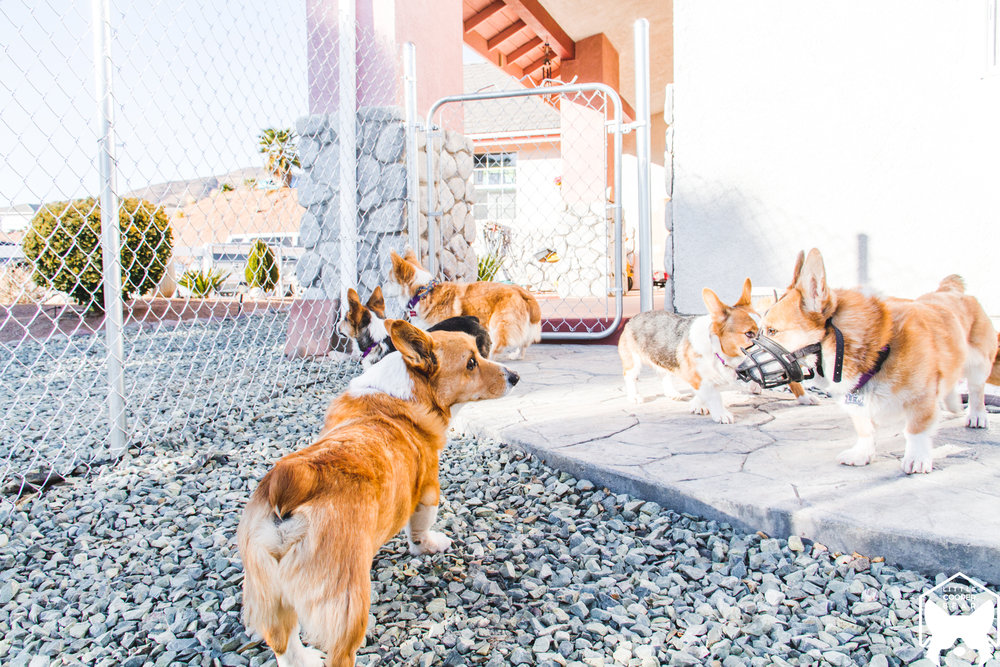 Everyone checking out the new fence that got put in! Now there'll be more space for them to explore and run around.