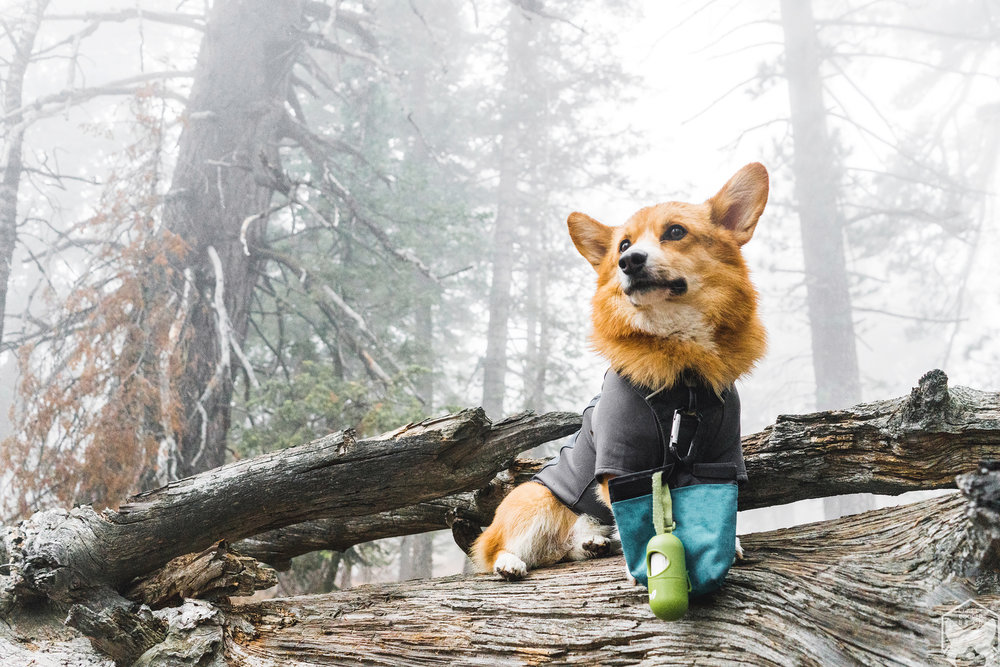 Cooper's main essentials: Compostable poop bag from  Earth Rated ®and his trail treats.