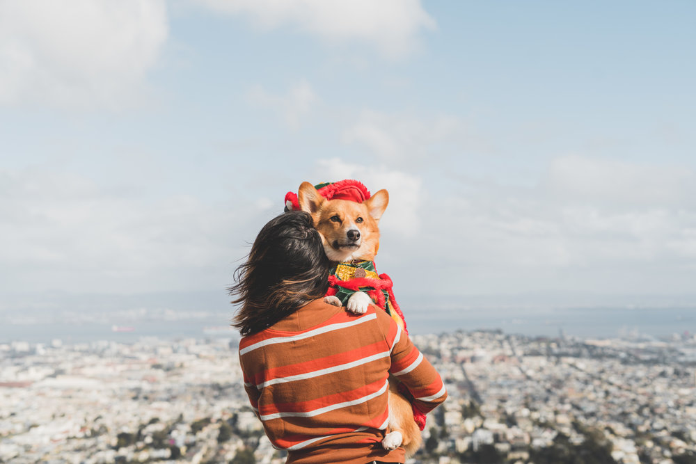 Hound - Bringing to you our personal dog-parenting experience with tips, tricks, recommendations, recipes, and all around knowledge that we've collected over the yearshound | travel | lifestyle