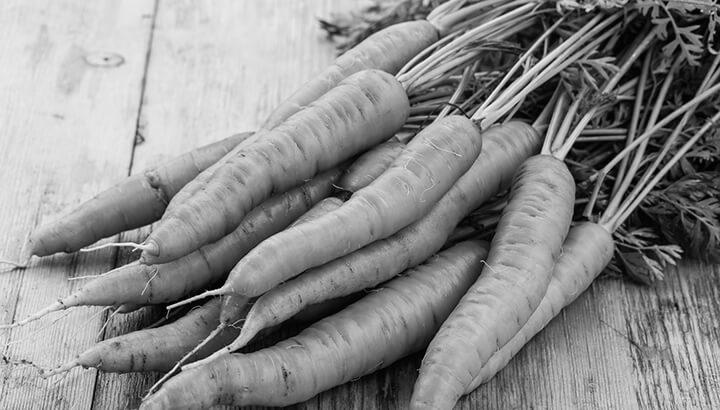 Carrot Seed  (Daucus Carota)