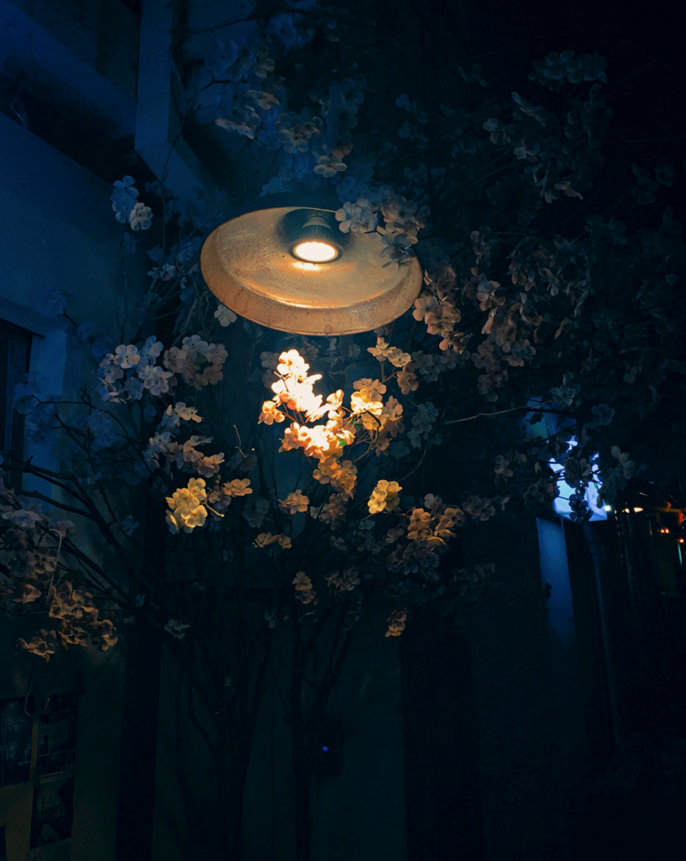 Flowers at night. Photo by An Rong Xu.