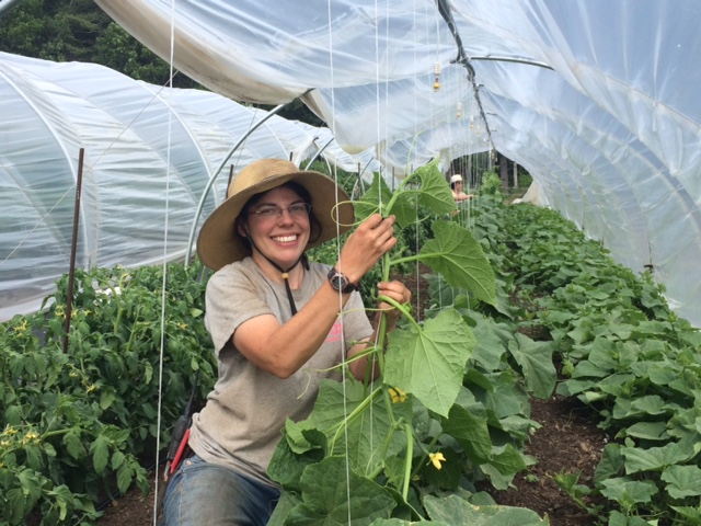 Assistant Manager Danielle, trellising our cucumber plants.