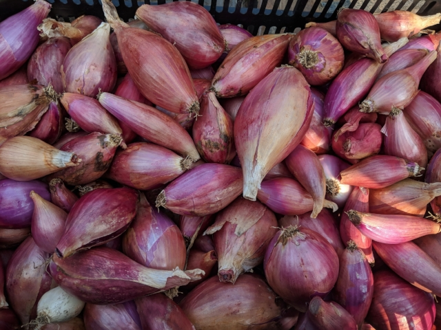 We'll have our Red Long of Tropea Onions on Saturday - very similar in taste to a shallot!