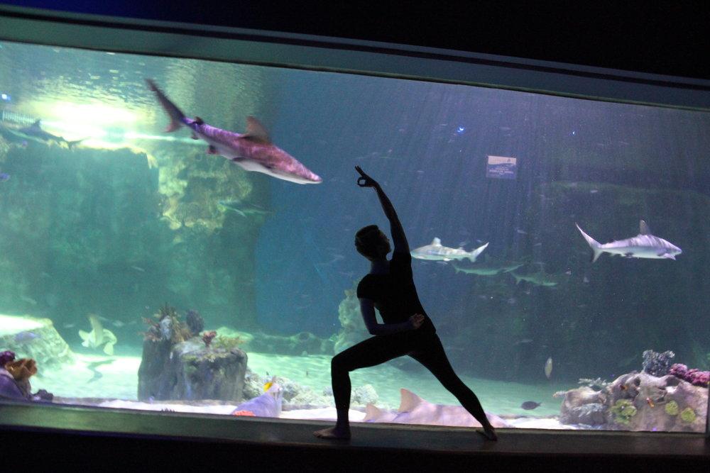 Photo courtesy Loveland Living Planet Aquarium
