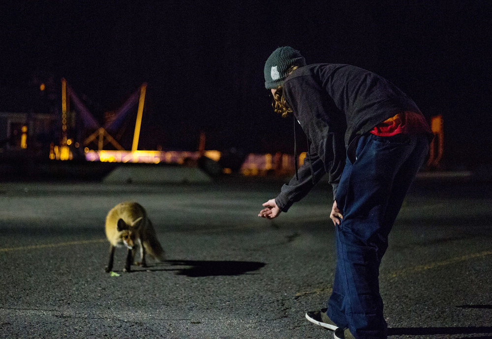 The foxes come out at night.   Photo : Matt Boozer