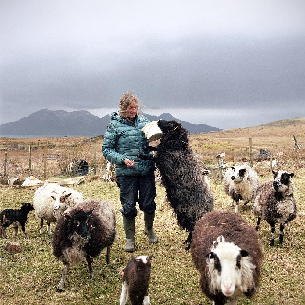 2018 04 eigg celia sheep.jpg