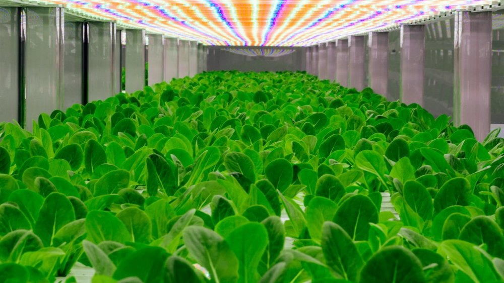 oasis-biotech-uses-a-controlled-indoor-environment-and-an-led-lighting-system-to-grow-fresh-produce-365-days-a-year.jpg