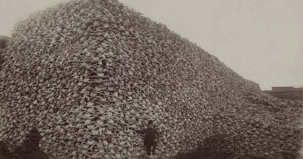 Mountain of buffalo skulls, western North America, 1870. Wikipedia Commons.
