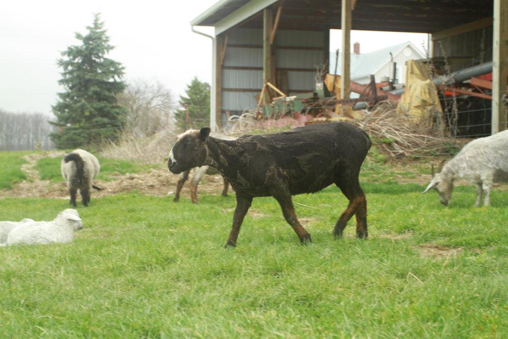 post shearing 2017